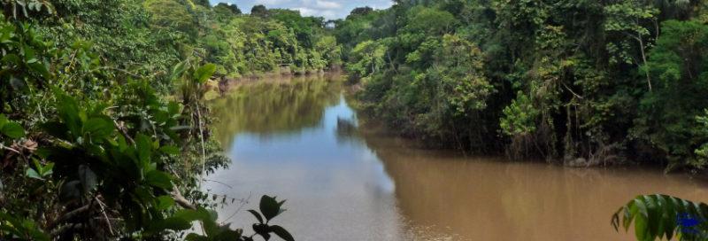 Amazonas anglen